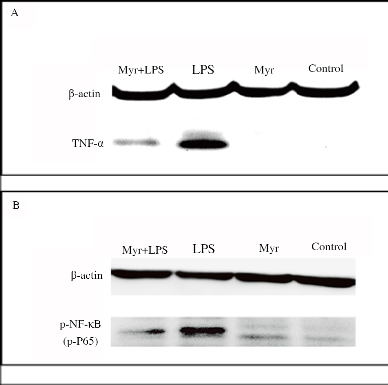 Figure 1: Western blot analysis.