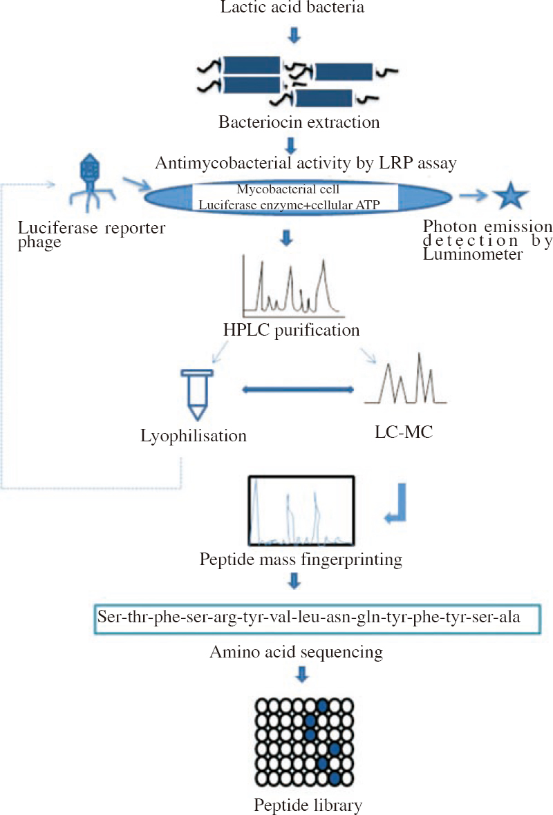 Figure 2: Schematic representation of characterization of bacteriocin screening for activity against <i>M. tuberculosis</i>, bacteriocin purification and proteomics analysis.