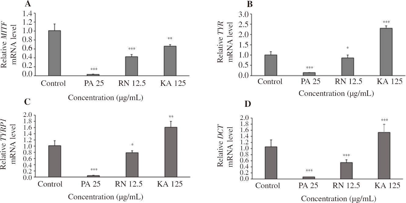 Figure 4: Effects of PA and RN extracts on mRNA levels of melanogenic enzymes in the reconstitutive skin model.