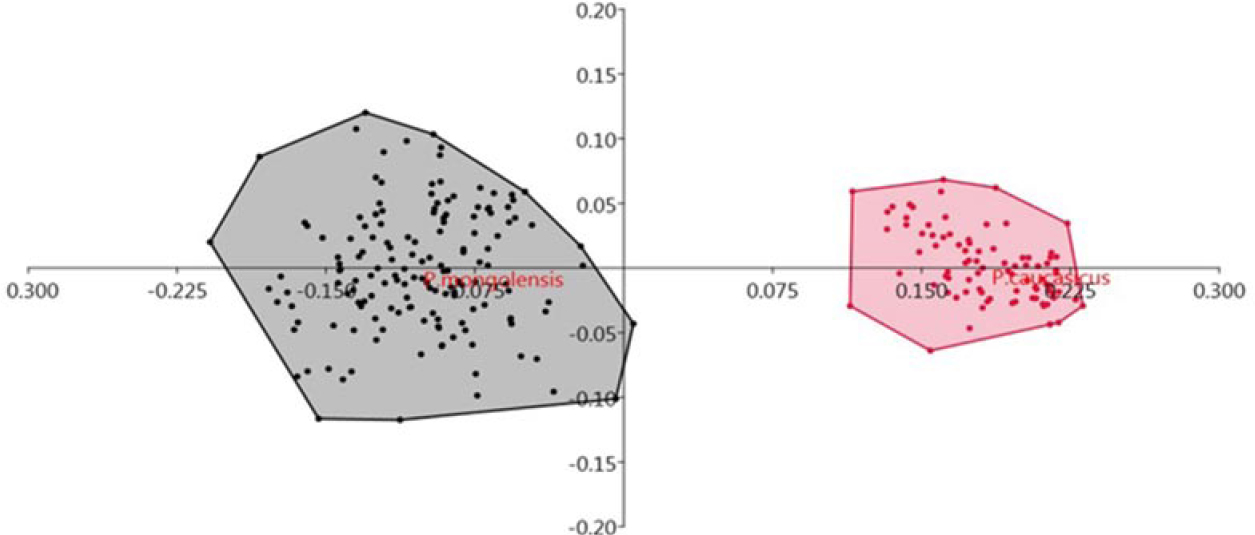Figure 4: Principal Component Analysis (PCA) of females of <i>Phlebotomus caucasicus</i> (pink color) and <i>Phlebotomus mongolensis</i> (Grey color).