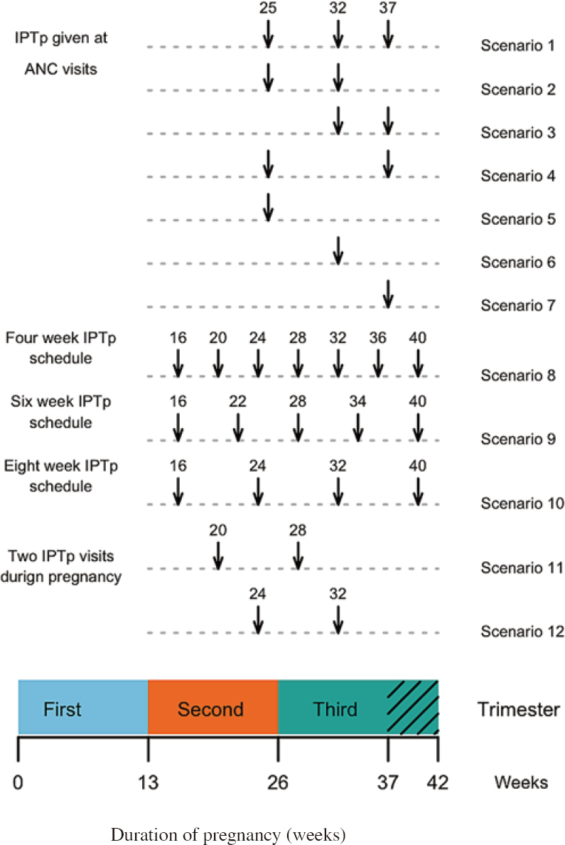 Figure 2: The adherence scenarios simulated for sulfadoxine-pyrimethamine intermittent preventative treatment in pregnancy (IPTp). The duration of pregnancy (in weeks and trimesters) are shown at the bottom of the plot. Black arrows indicate the timings of IPTp-SP doses for recommended IPTp schedules with each row representing a different adherence scenario. Simulated patients were given three doses of IPTp-SP as currently previously recommended by the World Health Organization (WHO) in 2013<sup>[4]</sup>, or two doses of IPTp-SP as previously recommended by the WHO in 2004 and 4, 6, 8 weekly doses of IPTp<sup>[4]</sup>. Full adherence is shown in rows Scenario 1, 8, 9, 10, 11 and 12 respectively, patterns of poor adherence are shown in the subsequent rows.